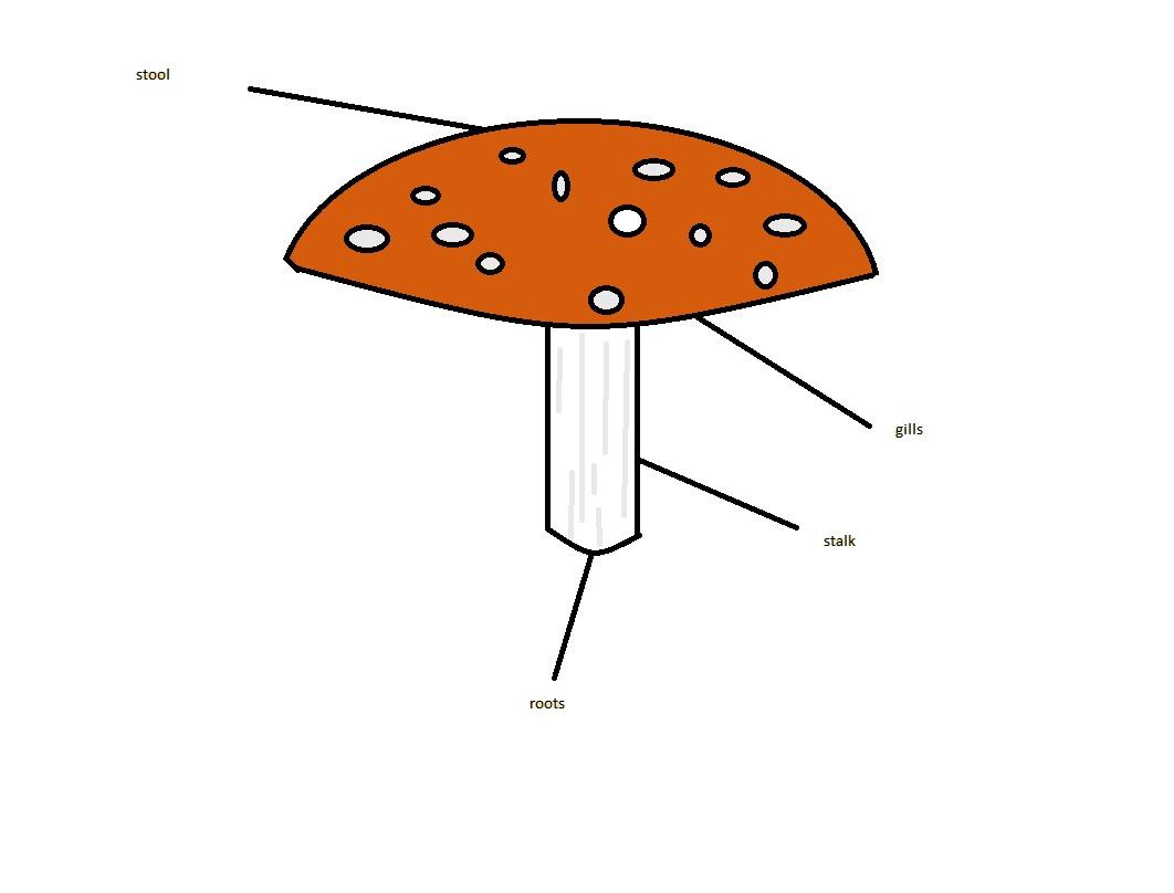 Mushroom Diagram