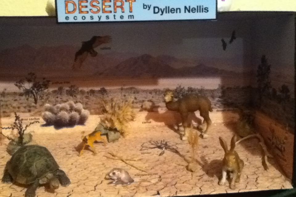 Habitat Diorama Desert Diy